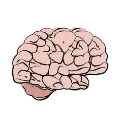 Human brain medical science section schematic vector