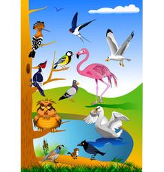 beautiful birds in nature vector image vector image