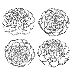 set of black and white flower isolated vector image