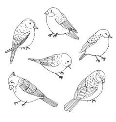 Birds outline set vintage collection doodles vector