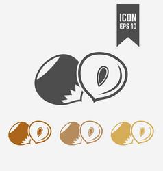 hazelnut isolated icon vector image