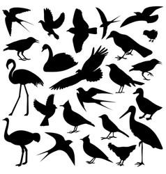 Image of birds vector