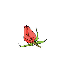 pink rose bud isolated on white background vector image