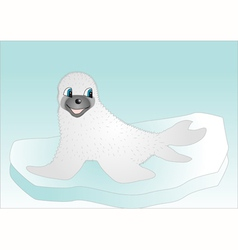 Seal on ice vector image