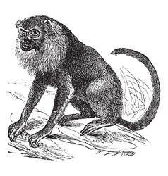 Ursine Howler vintage engraving vector image