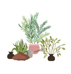 Houseplants with potted isolated icon vector