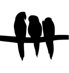 Image parrots vector