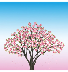 Beautiful spring background with sakura vector image vector image