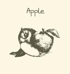 ink hand drawn vintage apple vintage fruit vector image vector image