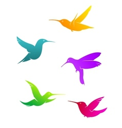 Colorful flying hummingbirds vector image vector image