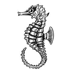 seahorse isolated on white background design vector image