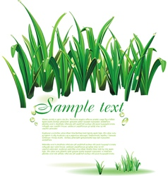 template with green grass vector image vector image