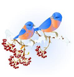 Birds thrush bluebirds small songbirdons vector