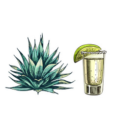 Cactus blue agave vintage hatching color vector