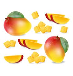 mango fruit slices set realistic detailed vector image