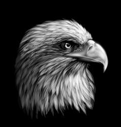 Monochrome portrait a eagle vector
