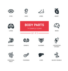 Body parts - modern simple thin line design icons vector