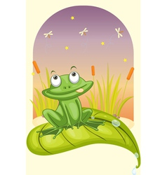 Frog on a leaf vector