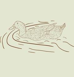 wild duck hand-painted vector image vector image