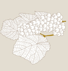 abstract grape with leafs vector image vector image