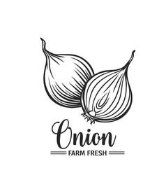 hand drawn onion icon vector image