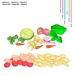 Thai herbs with vitamin c a k b6 and b9 vector