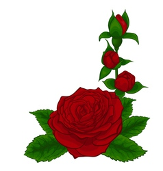 red roses decorative floral design element vector image