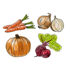 types of fresh vegetables vector image vector image