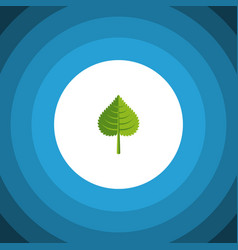 Isolated foliage flat icon hickory element vector