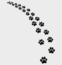 trail of cat vector image