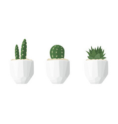 cactus and succulent in a flat style vector image