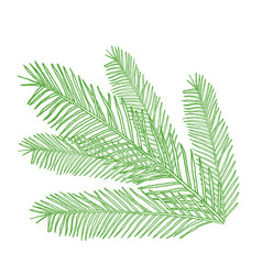 conifers on white evergreen vector image vector image