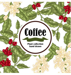 banner with coffee plant coffee beans and vector image