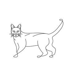 cat logo outline vector image