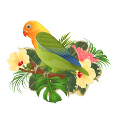 Parrot lovebird agapornis tropical bird vector