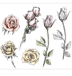 set of hand drawn roses flowers vector image