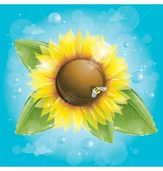 Beautiful sunflower and green leaves against blue vector image vector image