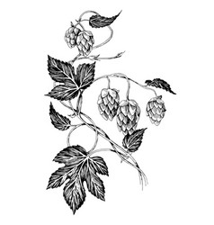 Hand drawn hop branch with leaves and cones vector