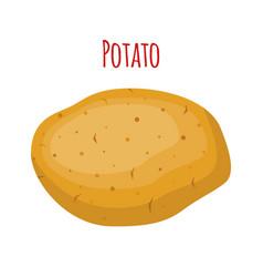 potato organic food cartoon flat style vector image