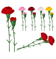 Red carnations isolated on white vector image