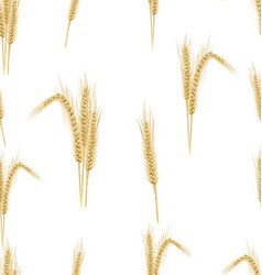 wheat on a white background seamless pattern 0 vector image