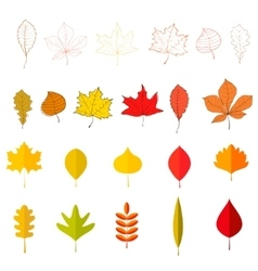 Set of the yellow autumn leaves design vector image