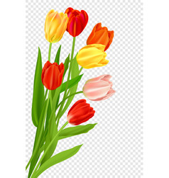 bouquet tulips isolated vector image