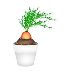 Fresh Orange Carrot in Ceramic Flower Pots vector image