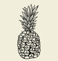 hand drawn pineapple vector image