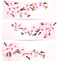Three sakura branch banners vector