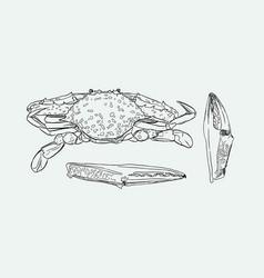 vintage crab drawing vector image vector image
