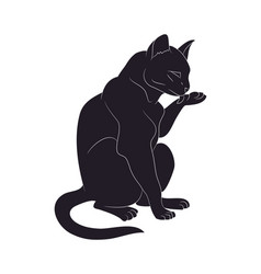A cat that licks its paw drawing vector