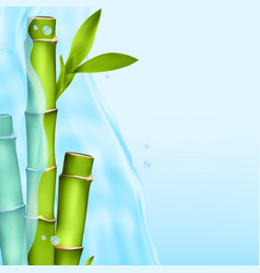 Bamboo in a water splash vector