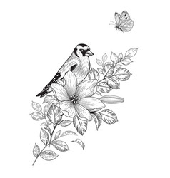 hand drawn goldfinch sitting on flower vector image